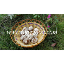 Top Quality Stem Cut Dried Great White Flower Shiitake Mushroom